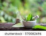 alternative health care fresh... | Shutterstock . vector #570082696