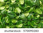 Spinach Background Full Image....
