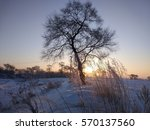 A Lone Dry Tree In A Frosty...