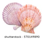 Clam Mollusc Shells Isolated O...