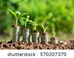 plant put on stack coins look... | Shutterstock . vector #570207370