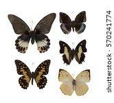 Realistic Butterflies...