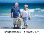 Stock photo cute mature couple holding hands walking the dog on the beach 570250474