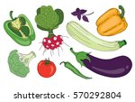 vegetables and herbs organic... | Shutterstock .eps vector #570292804