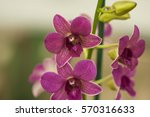 closeup of flower in hilo hawaii | Shutterstock . vector #570316633