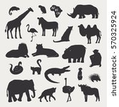 african animals vector... | Shutterstock .eps vector #570325924