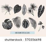 beautiful hand drawn  botanical ... | Shutterstock .eps vector #570356698