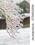 frozen plants covered in a...   Shutterstock . vector #570402004