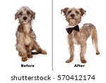 before and after photo of a... | Shutterstock . vector #570412174