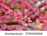 close view of plastic pink... | Shutterstock . vector #570443068