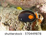 Small photo of Achilles tang in Hawaii