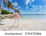 Flamingos On The Beach. Aruba...