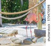 Flamingo And Iguana On The Beach