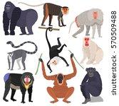 monkey set character animal... | Shutterstock .eps vector #570509488