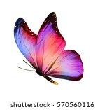 Stock photo color butterfly isolated on white 570560116