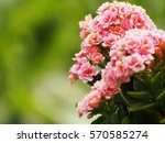 flower in pink | Shutterstock . vector #570585274