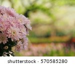 flower in pink | Shutterstock . vector #570585280