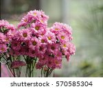flower in pink | Shutterstock . vector #570585304