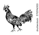 rooster drawing sketch hand... | Shutterstock .eps vector #570596503