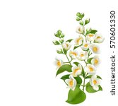 realistic jasmine flower.... | Shutterstock .eps vector #570601330
