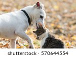 cute jack russel dog and... | Shutterstock . vector #570644554