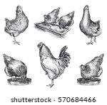 chicken breeding. animal... | Shutterstock .eps vector #570684466