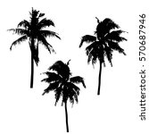 realistic silhouettetropical...   Shutterstock .eps vector #570687946