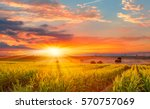 sunrise over the corn field | Shutterstock . vector #570757069