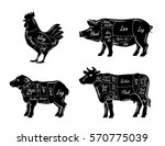 butchers guide symbols vector... | Shutterstock .eps vector #570775039