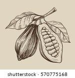 cocoa vector symbol vector... | Shutterstock .eps vector #570775168