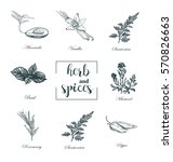 collection of herbs and spices... | Shutterstock .eps vector #570826663