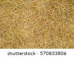 Dry Yellow Straw Grass...