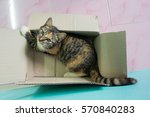 a kitten plays in the cardboard ... | Shutterstock . vector #570840283