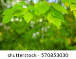 spring background with green... | Shutterstock . vector #570853030