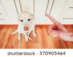 hand of man and guilty dog ... | Shutterstock . vector #570905464
