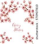 cherry blossom spring flowers ... | Shutterstock . vector #570907810