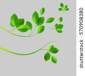 realistic leaves and twigs on a ... | Shutterstock .eps vector #570908380