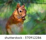 praying squirrel | Shutterstock . vector #570912286