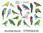 parrots birds color set | Shutterstock .eps vector #570936310