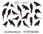 parrots birds silhouette set | Shutterstock .eps vector #570936400