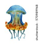 watercolor realistic hand draw... | Shutterstock . vector #570989968