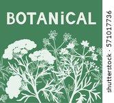 botanical floral green... | Shutterstock .eps vector #571017736
