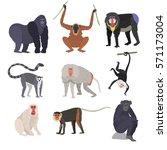 different types of monkeys rare ... | Shutterstock .eps vector #571173004