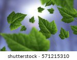 green maple leaves on abstract... | Shutterstock . vector #571215310