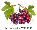 vector. grape cluster with... | Shutterstock .eps vector #57121549