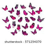 Stock photo big set pink monarch butterfly isolated on white background 571254370