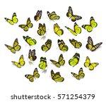 big set yellow monarch... | Shutterstock . vector #571254379