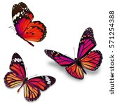 three monarch butterfly ...   Shutterstock . vector #571254388