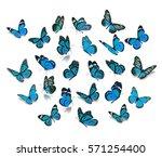 big set blue monarch butterfly...   Shutterstock . vector #571254400