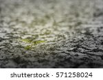 the trees in the barren soil of ... | Shutterstock . vector #571258024